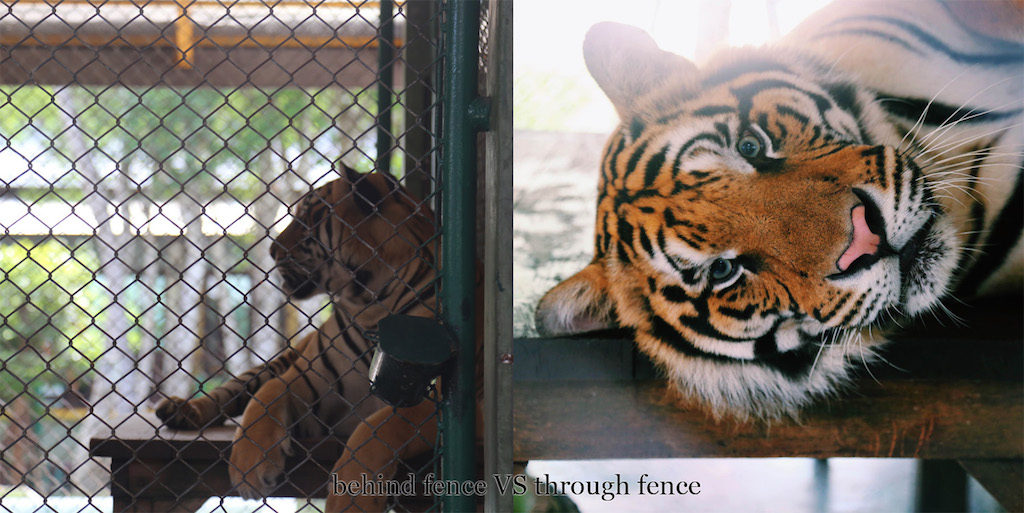 fence-vs-no-fence