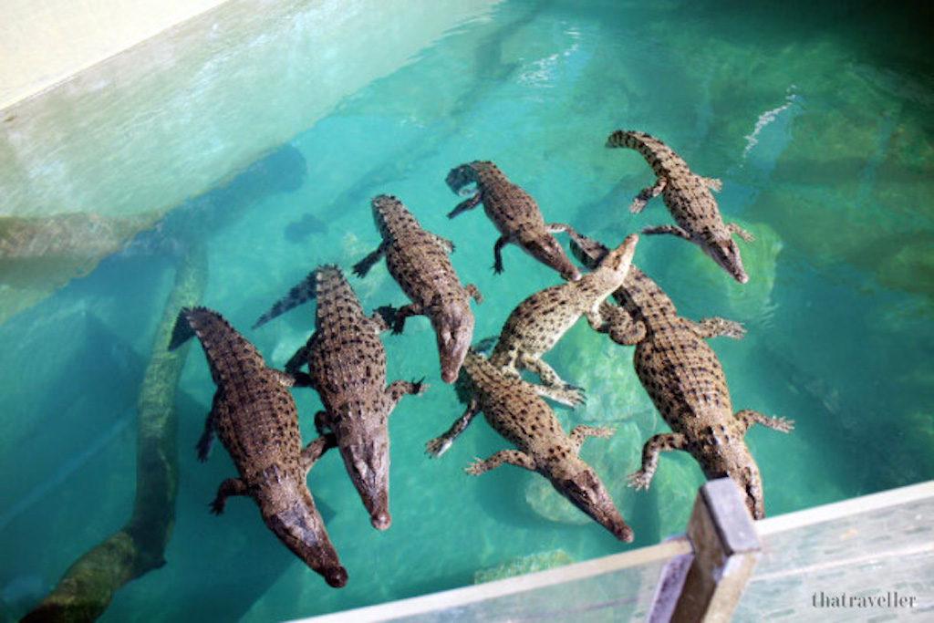 1020-croc-cove